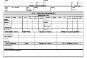sample dog health certificate template example